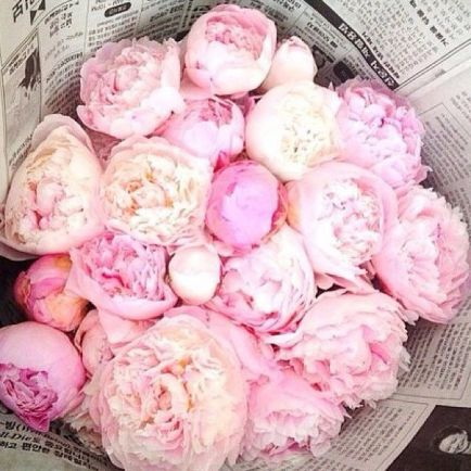 pink peonies bouquet