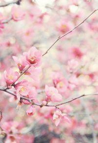 Everydayfacts Mood Spring Paris